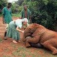 Kenya elephant conservationist Daphne Sheldrick dies, aged 83