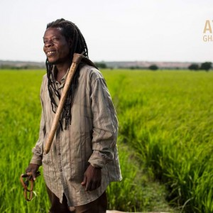 Happy  Farmers Day, Ayekoo to all Farmers!