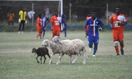 Sheep disrupt Liberty Prof. vrs Dwarfs game