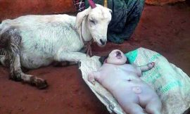 Photo: Sheep Gives Birth To Human – Like being In Eastern Region