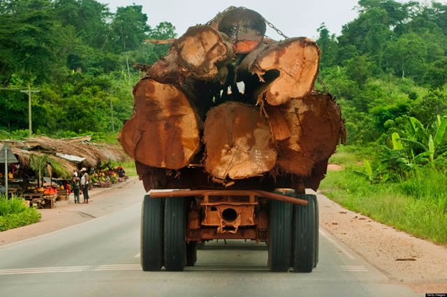Elizabeth Ohene writes: Rosewood, the timber to kill for