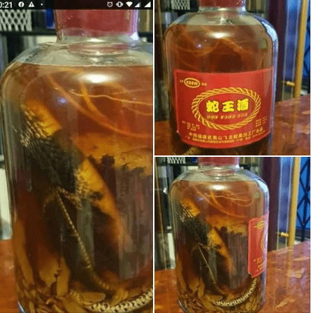 """(Worrying): Ghana Youths Taking Snake & Frog Bitters To Get """"High""""."""
